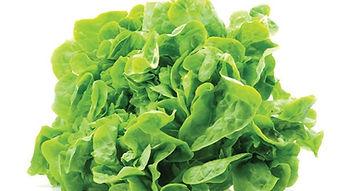семена салата, шпината, щавеля