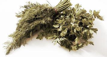 семена укропа, петрушки, сельдерея, корианда