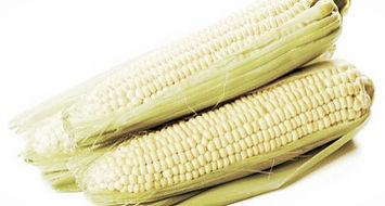 семена кукурузы, подсолнечника