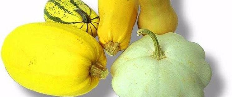 семена кабачков и патиссонов