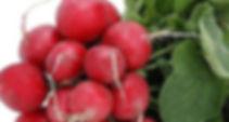 семена редиса, репы, редьки, дайкона