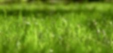 семена злаков