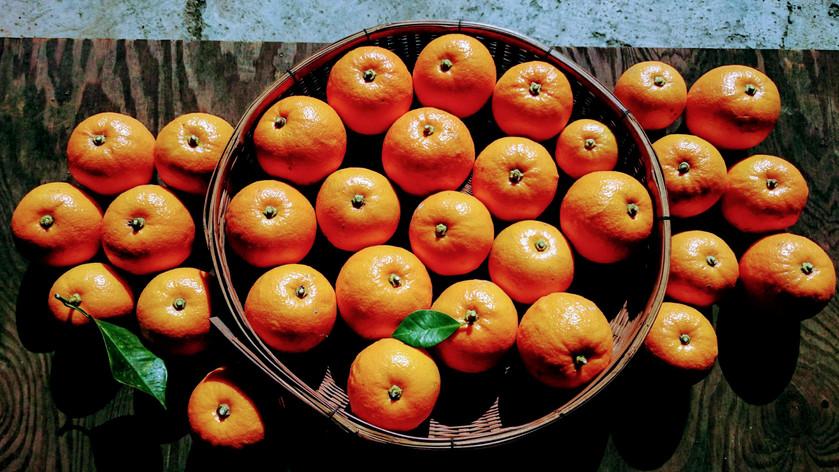 柑橘のせかい *里山の暮らし*