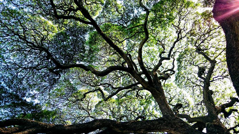 木とのはなし *里山の暮らし*