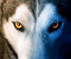 Wolf Weekly Recap