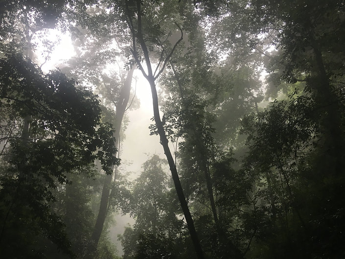 A misty, ancient forest with many trees and leaves taken at Qing Cheng Mountain in China for Hidden Root Acupuncture