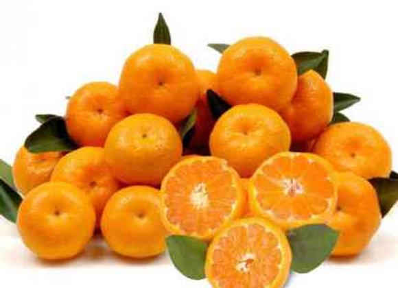 Spanish Clemetine西班牙海岸蜜橘 /5个
