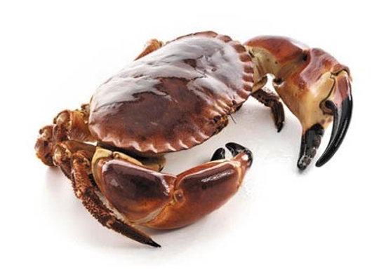 Brown Crab 面包螃蟹 (只)950-1050 g