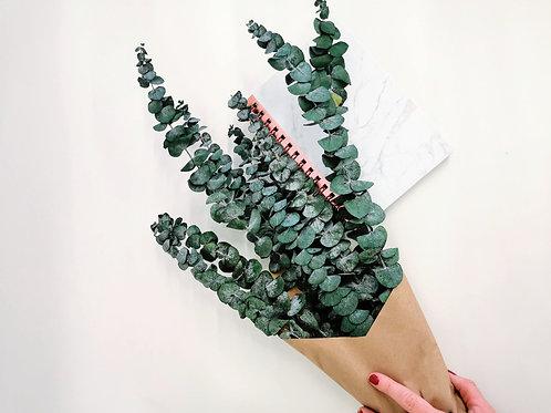Eucalyptus préservé Vert
