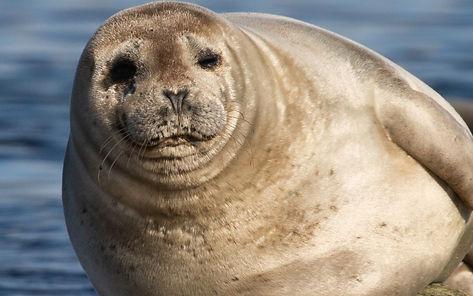 Tommi J Svalbard -2228.jpg