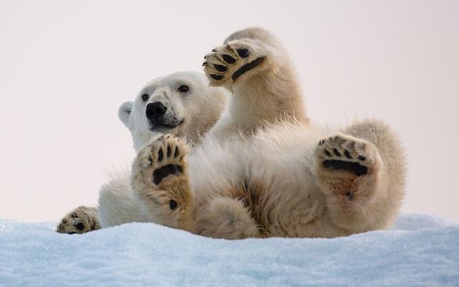 Tommi J Svalbard -3548.jpg