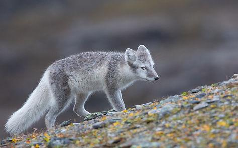 Tommi J Svalbard -5634.jpg