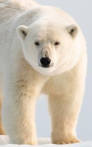 Tommi J Svalbard -3410.jpg