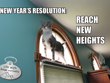 Having Trouble Figuring out a New Years Resolution?
