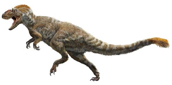 Weighing in at 1.5 tons, the Yutyrannus huali was discovered in China in 2012.