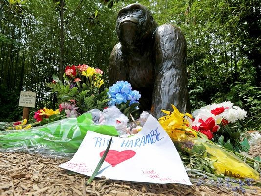 Photo by Liz Dufour, The Cincinnati Enquirer Zoo visitors made a memorial for Harambe at the statue of the gorillas at the entrance of the Cincinnati Zoo's Gorilla World.