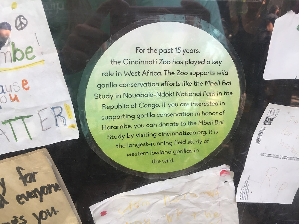 A sign at the gorilla exhibit describing the zoo's conservation work over the years.