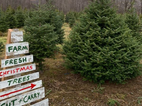 Real or Artificial Trees: Which are Greener?