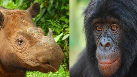 Cincinnati Zoo vs. Extinction