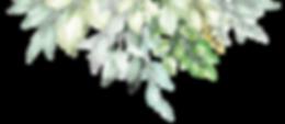 plantes2-03.png