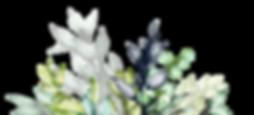 plantes-02.png