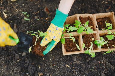 How to sow your seeds