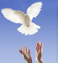 wedding_dove[1].jpg