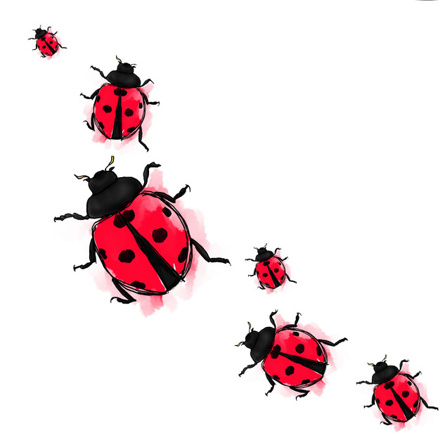 ladybirdparadejpeg.jpg