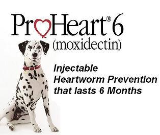 Proheart 6