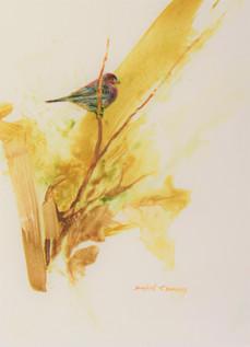 190047 Purple Finch.JPG