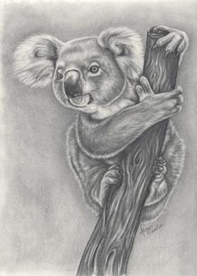 Koala.jpeg