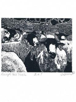 Bruns_Rough Fell Flock-Engraving.jpg