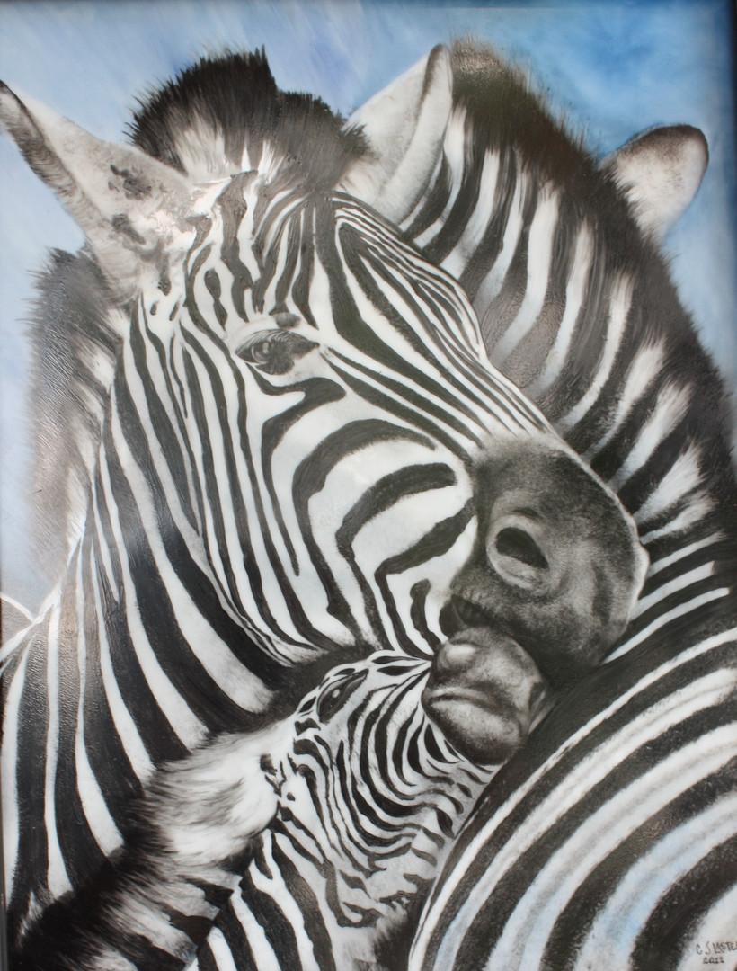 CJ Zebras.jpg