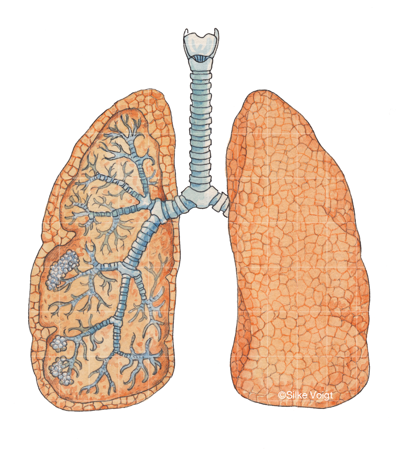 Lunge Silke Voigt