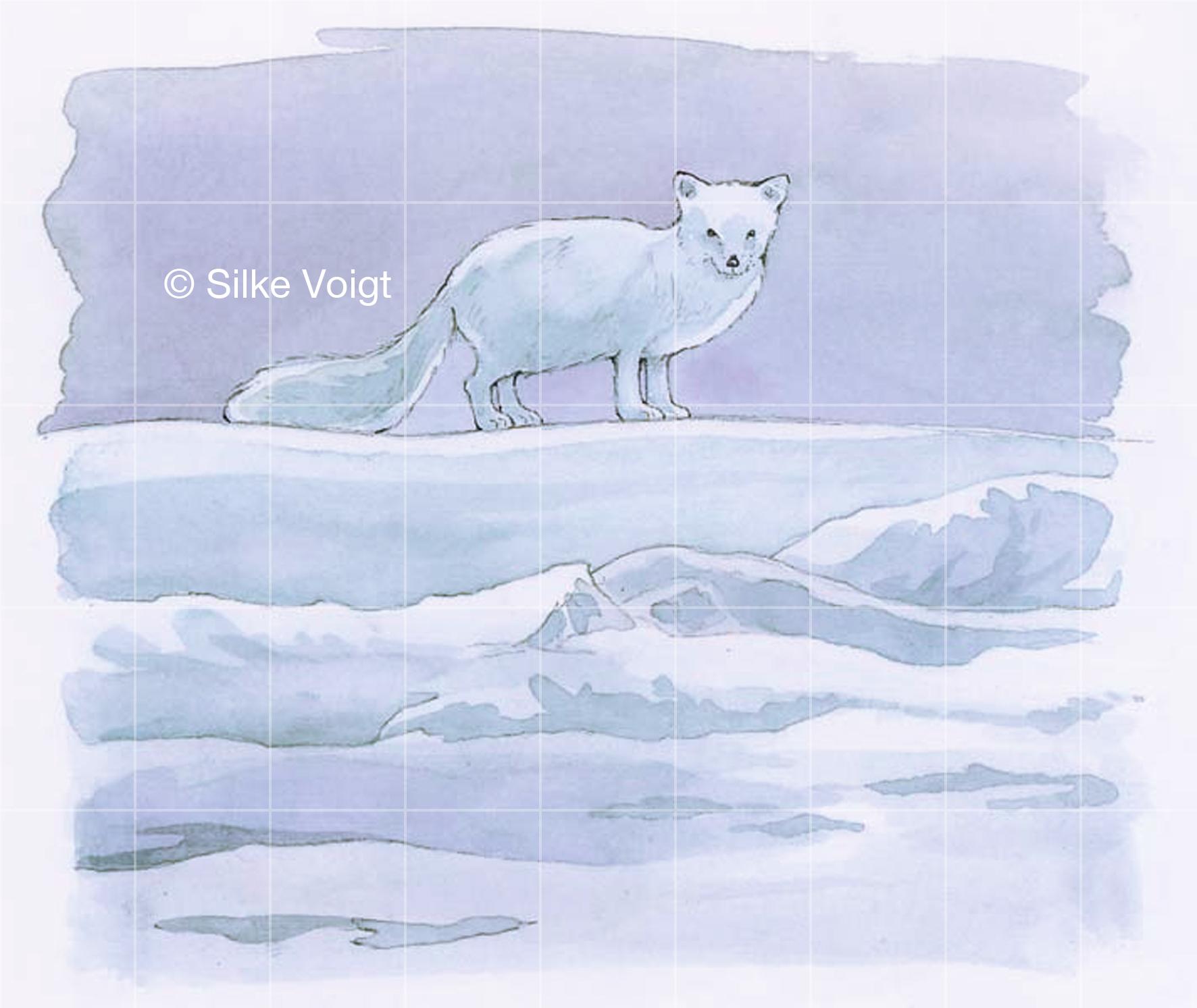 Eisbären 13 Silke Voigt
