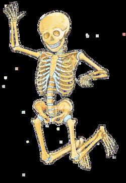 Skelett Silke Voigt