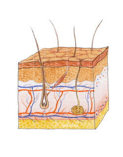 Haut Silke Voigt