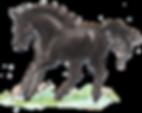 Silke Voigt WIW Pferde Tessloff