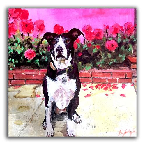 """20"""" x 20"""" Pet Portrait"""