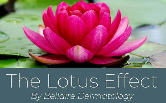 The Lotus Effect Membership