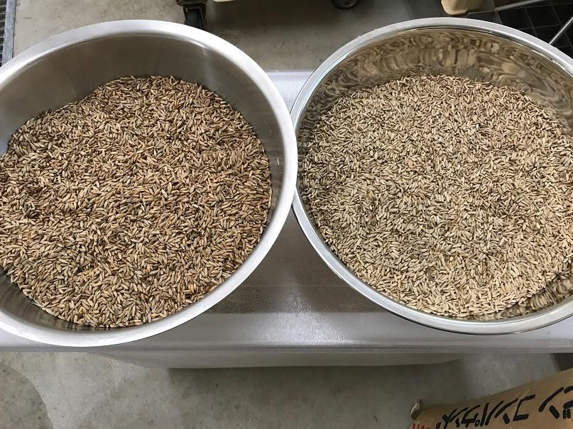 自家製ライ麦と長野県産ライ麦