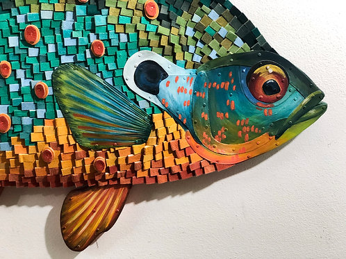 Orange Spotted Sunfish