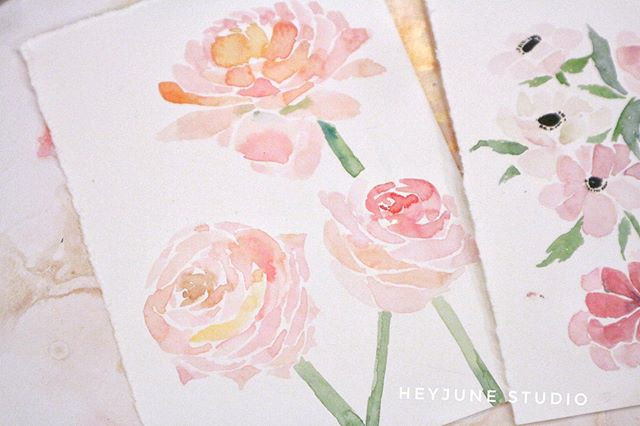 𝐏𝐞𝐨𝐧𝐲_Continue to study floral 🌸🌸