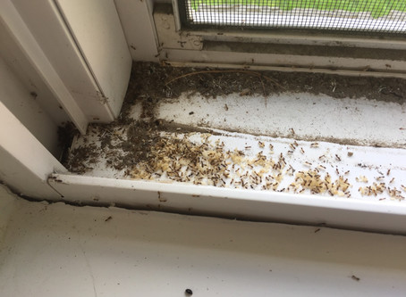 North Texas Pests Home Inspectors Find Around the House