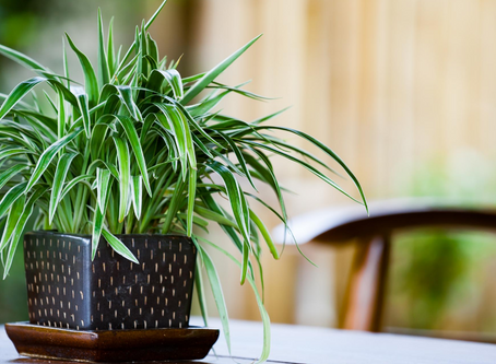 Plants That Clean The Air In Your House
