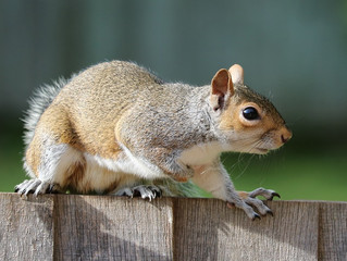 Rats and Mice and Squirrels– Oh My!