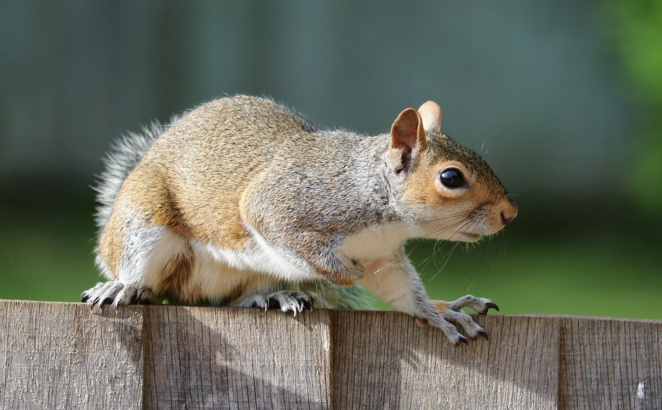rodents north texas, dallas area pest control, fall pests
