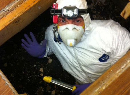 Crawl Spaces Aren't So Scary