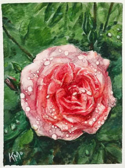 The First Rose