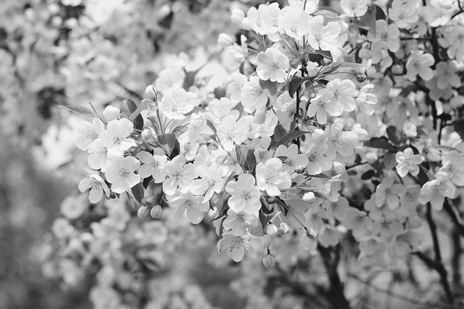 mario-garcia-269702-unsplash_edited.jpg
